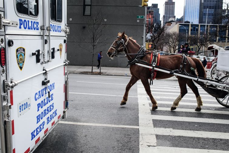 Outside the NYPD Horse Stables on West 53rd and 10th Ave., civilian horses and carriages pass by as they start their day. Photo: Robert Cohen/for Commercial Observer.