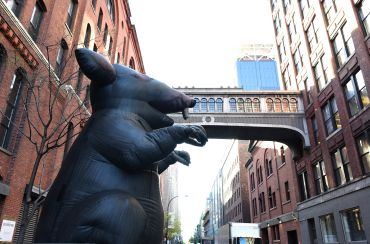 New York City construction unions have been deploying inflatable rats in protests for more than 40 years. Photo: TIMOTHY A. CLARY/AFP/Getty Images