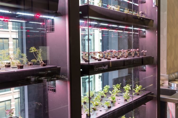 Microgreens grow on temperature and light regulated shelves in the Claus Meyer run food hall at 4 Times Square to provide fresh greens for the cooks.
