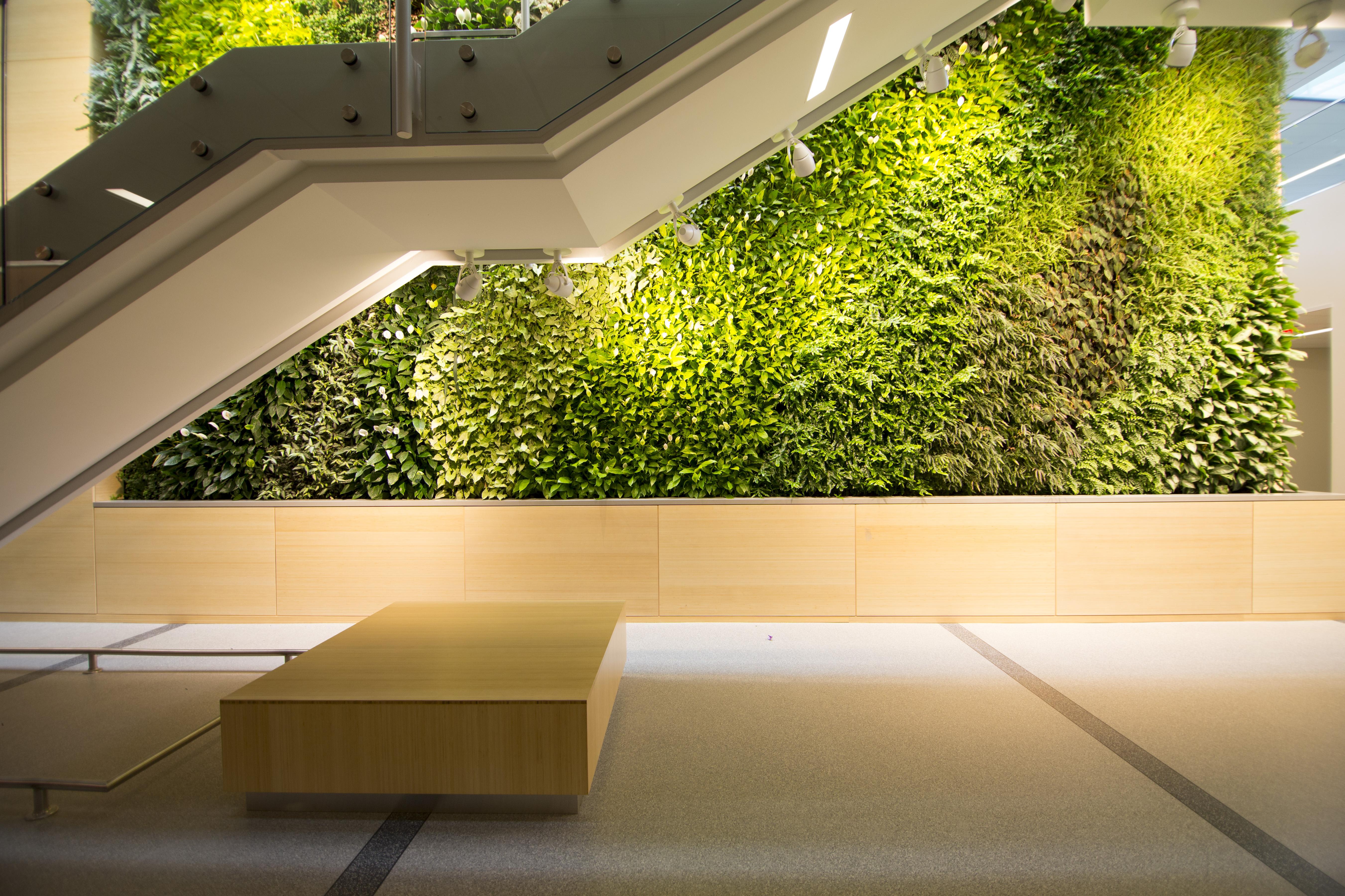 A green wall going up behind a staircase.