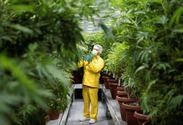 On Wednesday, U.S. Senate Majority Leader Chuck Schumer and Senators Cory Booker and Ron Wyden introduced a draft bill that would decriminalize cannabis at the federal level, a move that would open the floodgates to financing and real estate opportunities.