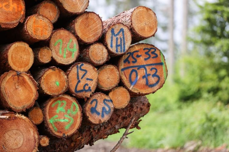 Lumber prices have shot up across Europe, America and the U.S. this spring because of pandemic sawmill closures and wildfires, putting contractors in New York and across the country in a tough position.