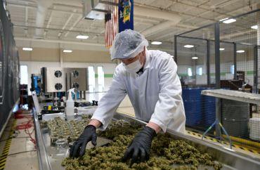 Cannabis cultivation facility